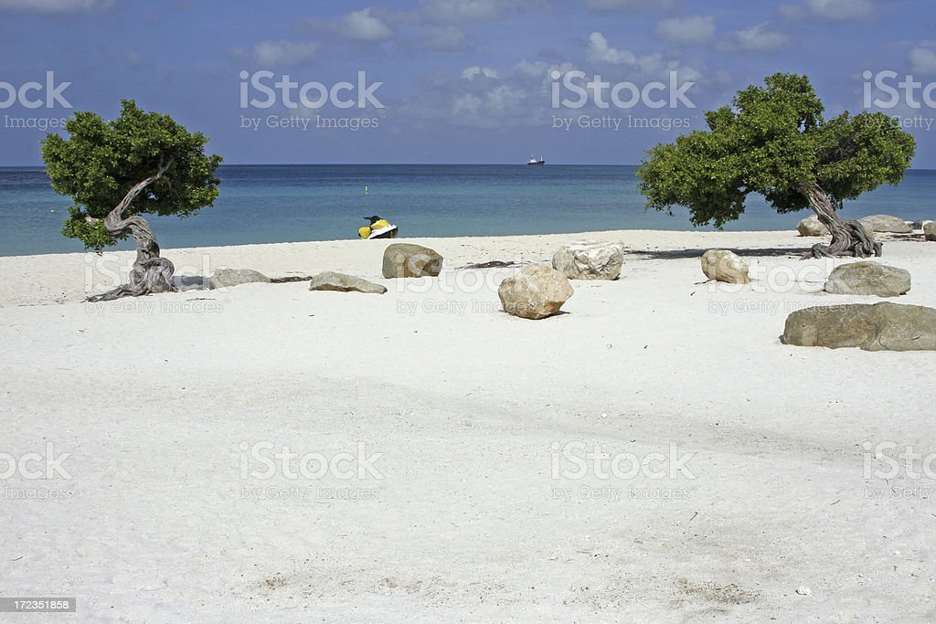 Dividivi trees Aruba # 2 royalty-free stock photo