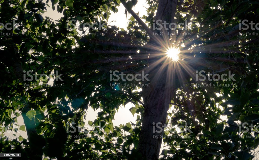 Divine light. Love and hope stock photo
