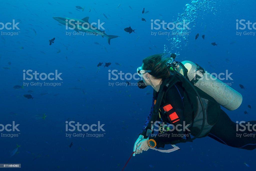 Diving Blue Corner, Palau - Micronesia stock photo