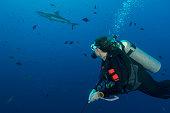 Diving Blue Corner, Palau - Micronesia
