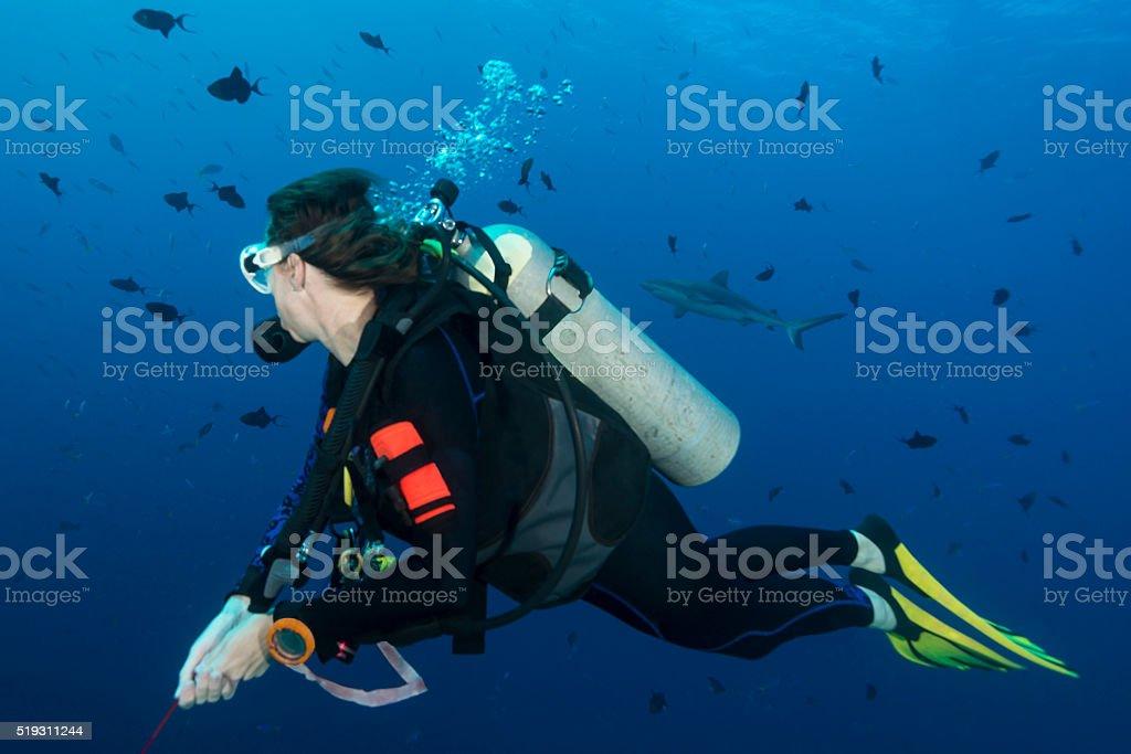 Diving Blue Corner, Palau stock photo