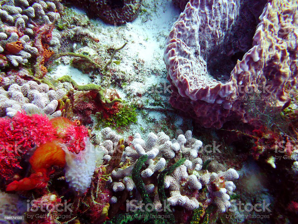 Diving in Cozumel, Mexico stock photo