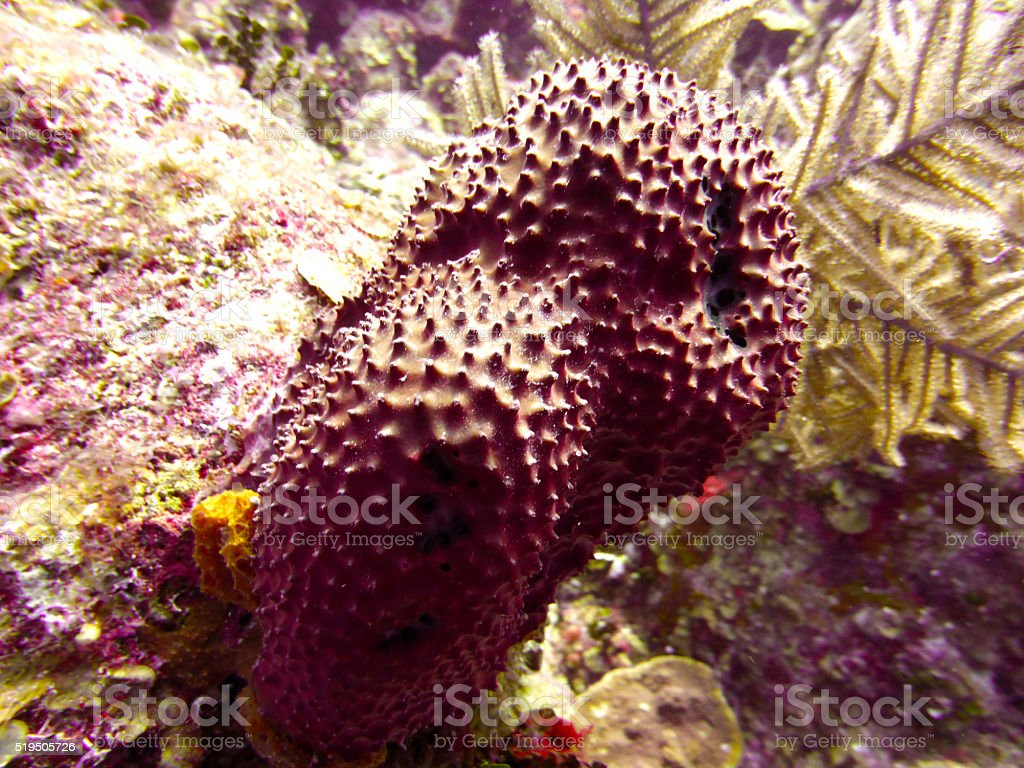 Diving in Georgetown, Cayman Islands stock photo