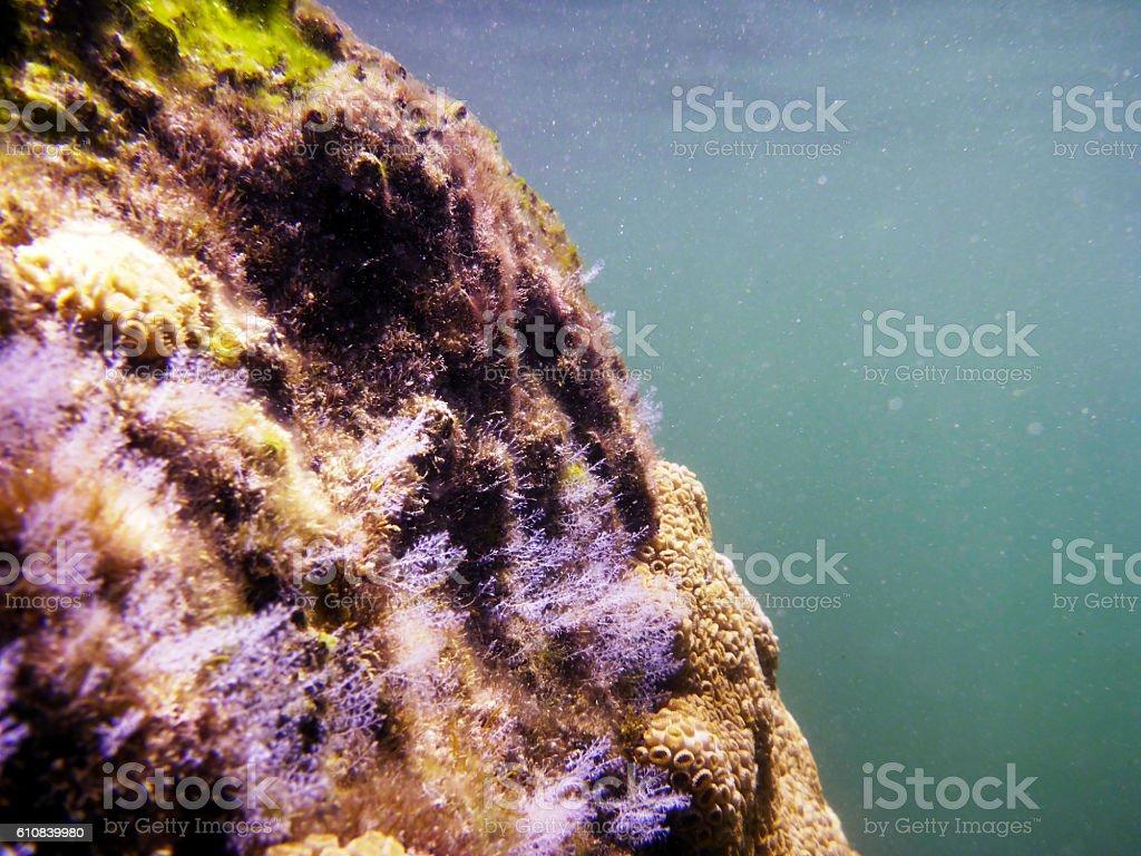 Diving in Ilha Grande, Rio de Janeiro, Brazil stock photo