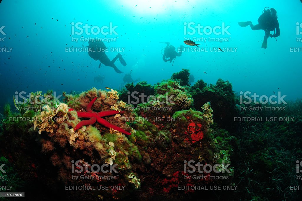 Diving in the Mediterranean Sea stock photo