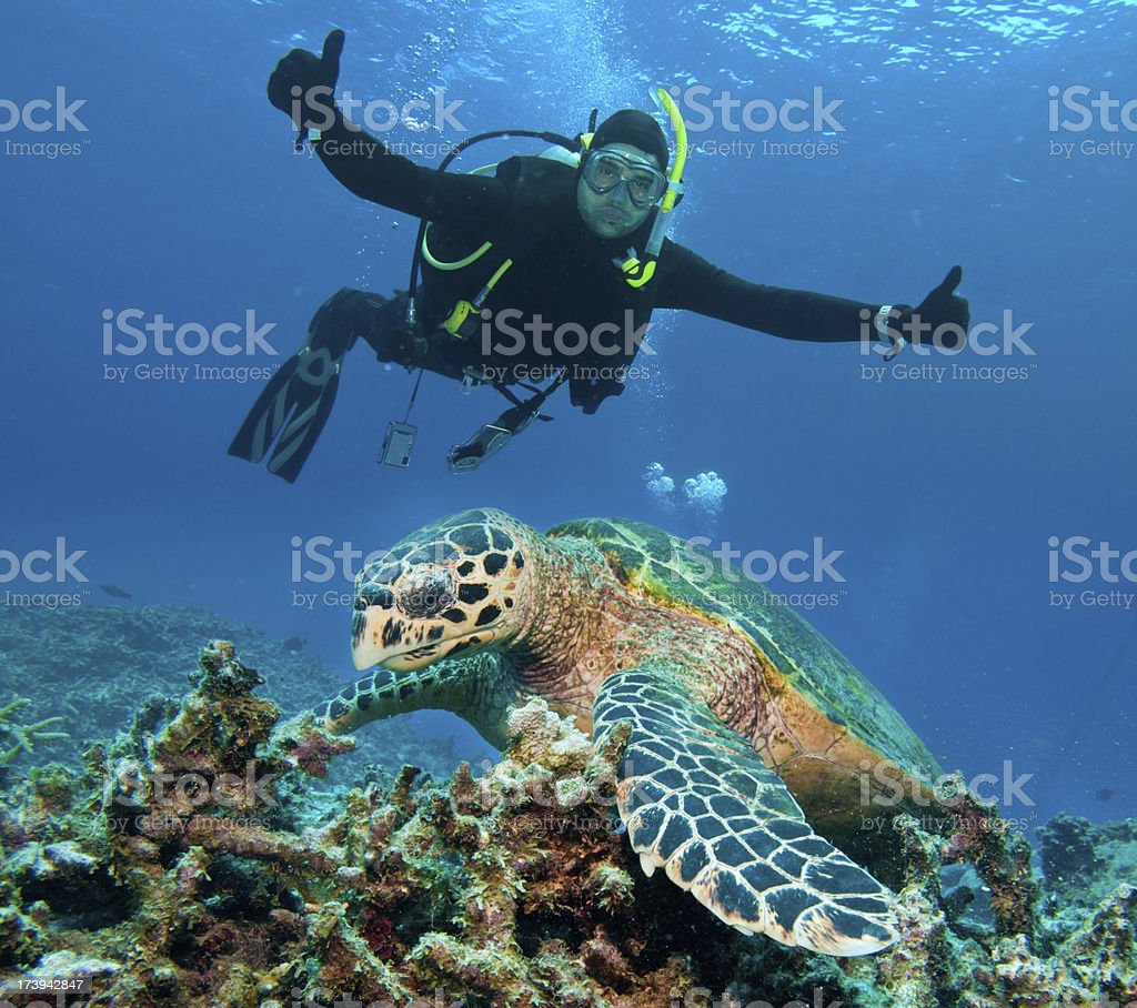 Diving with turtle in Great Barrier Reef. Australia stock photo