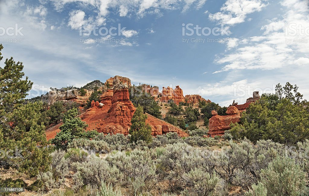 Dixie Forest Views stock photo
