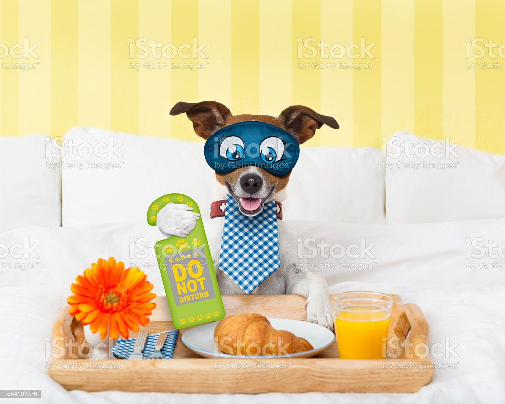 do not disturb sign with dog stock photo