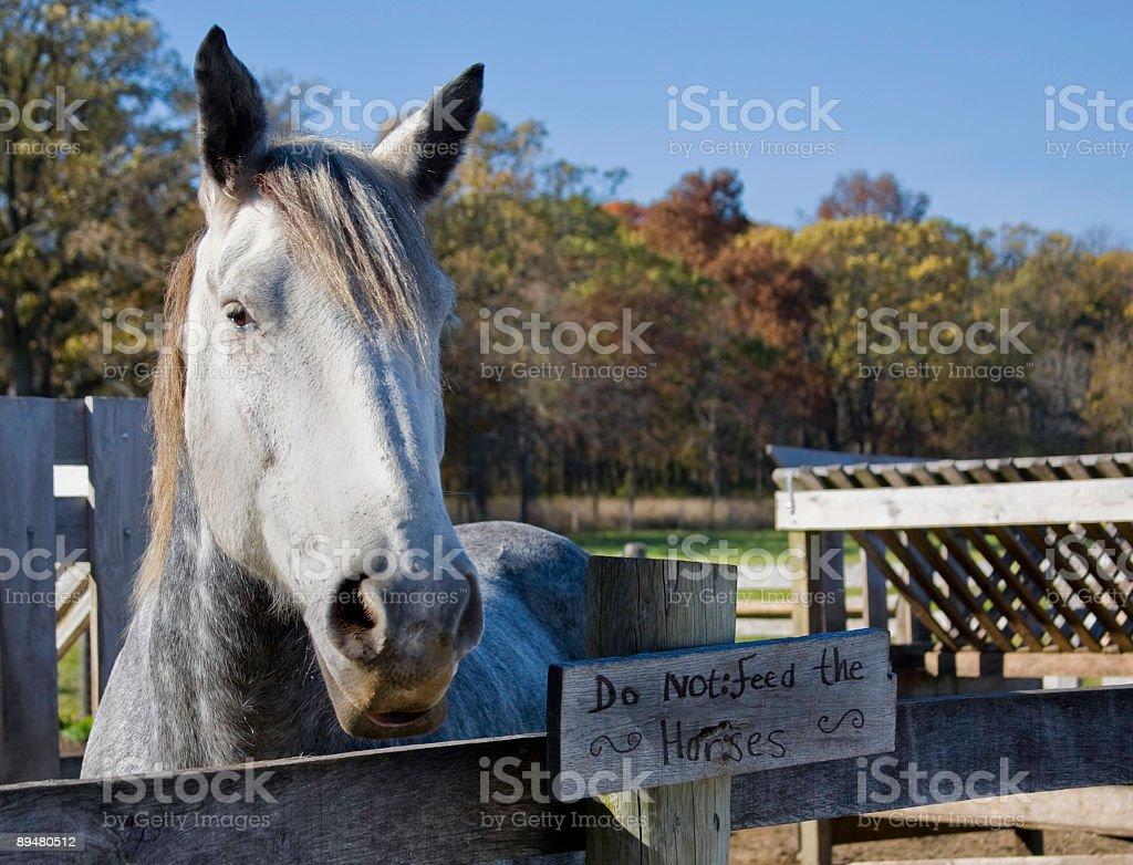 do not feed horses stock photo