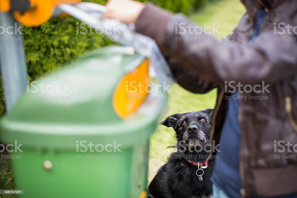 Do not let your dog faul! stock photo