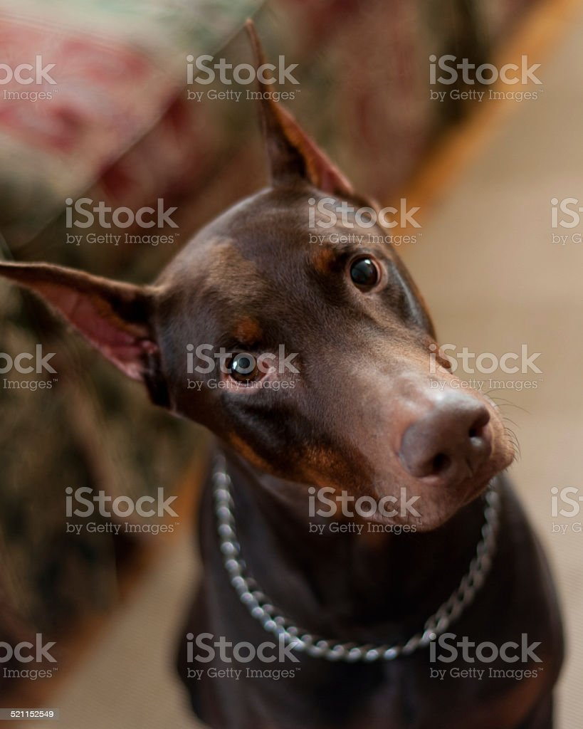 Dobe stock photo