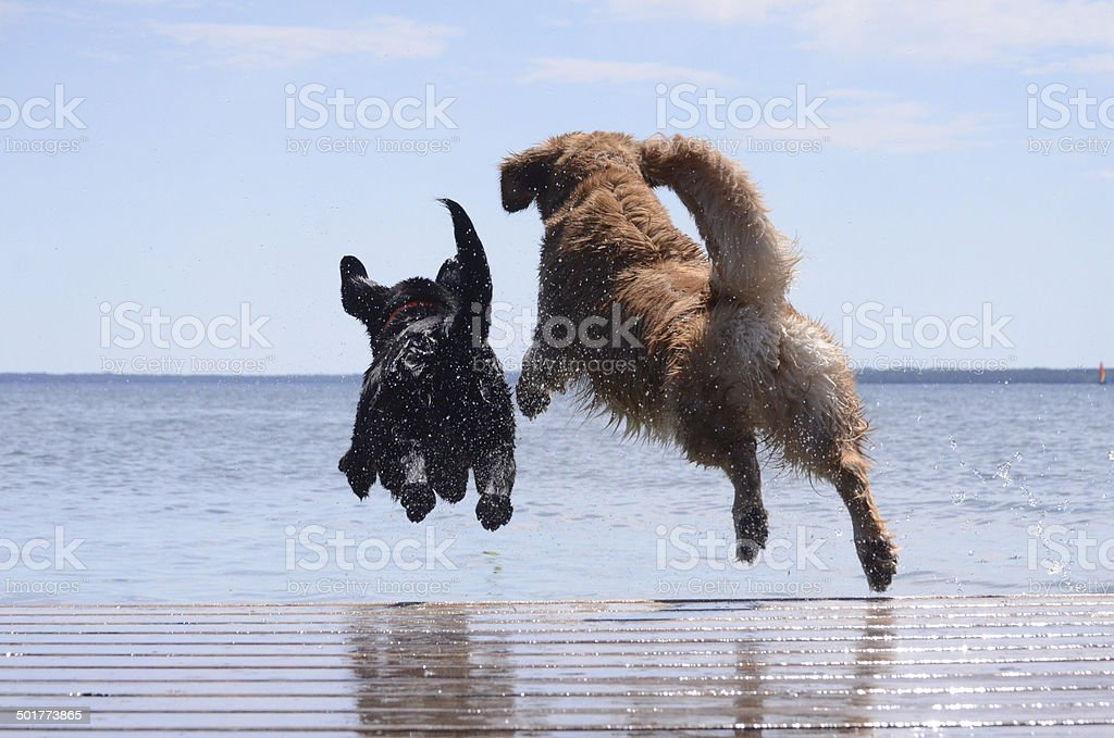 Dock Jumping Buddies stock photo