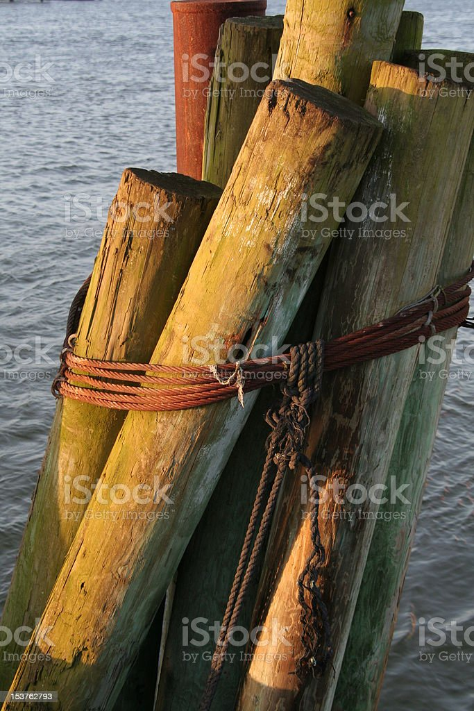 Dock Pilings in Morning Light royalty-free stock photo