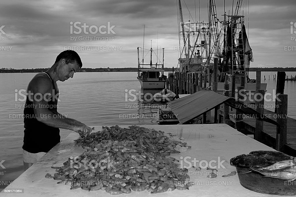 Dock worker cleans catch on shrimp boat dock stock photo
