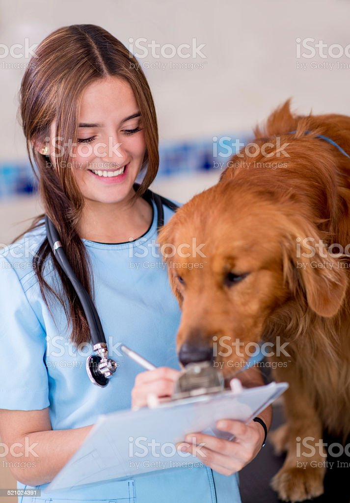 Doctor at the vet stock photo