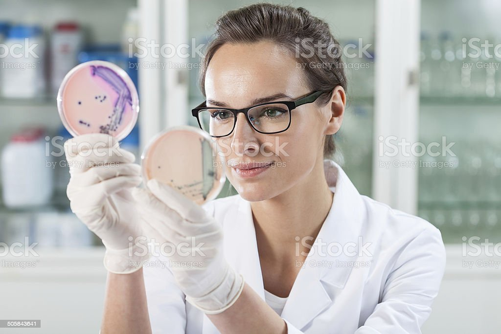 Doctor examining solution in Petri dishes stock photo