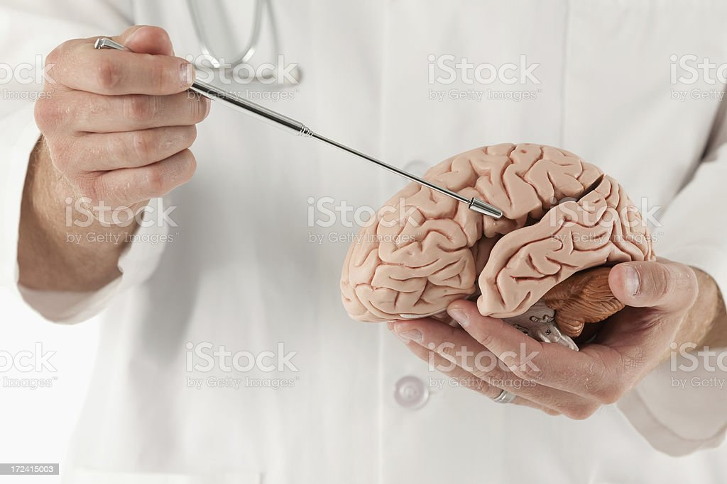 Doctor holding a brain royalty-free stock photo