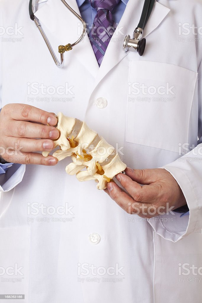 Doctor holding a model of lumbar vertebrae stock photo