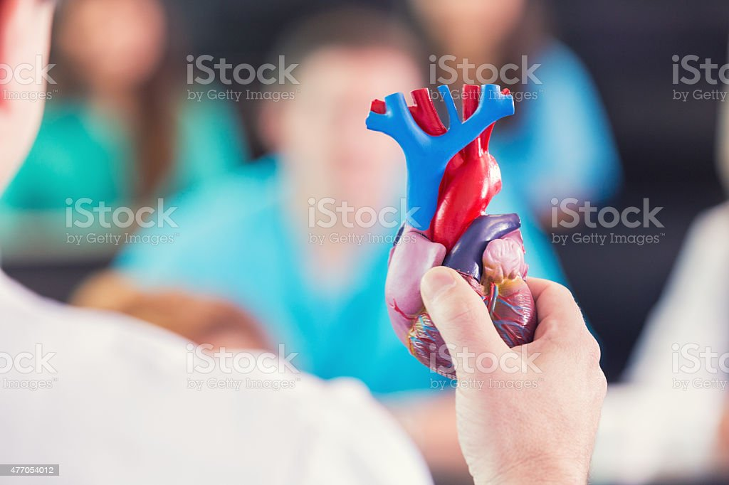 Doctor holding anatomical model of human heart at medical conference stock photo
