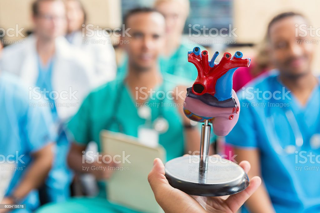 Doctor holding human heart model during a medical conference stock photo