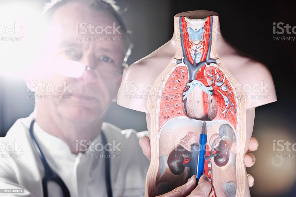 Doctor pointing at diaphragma stock photo