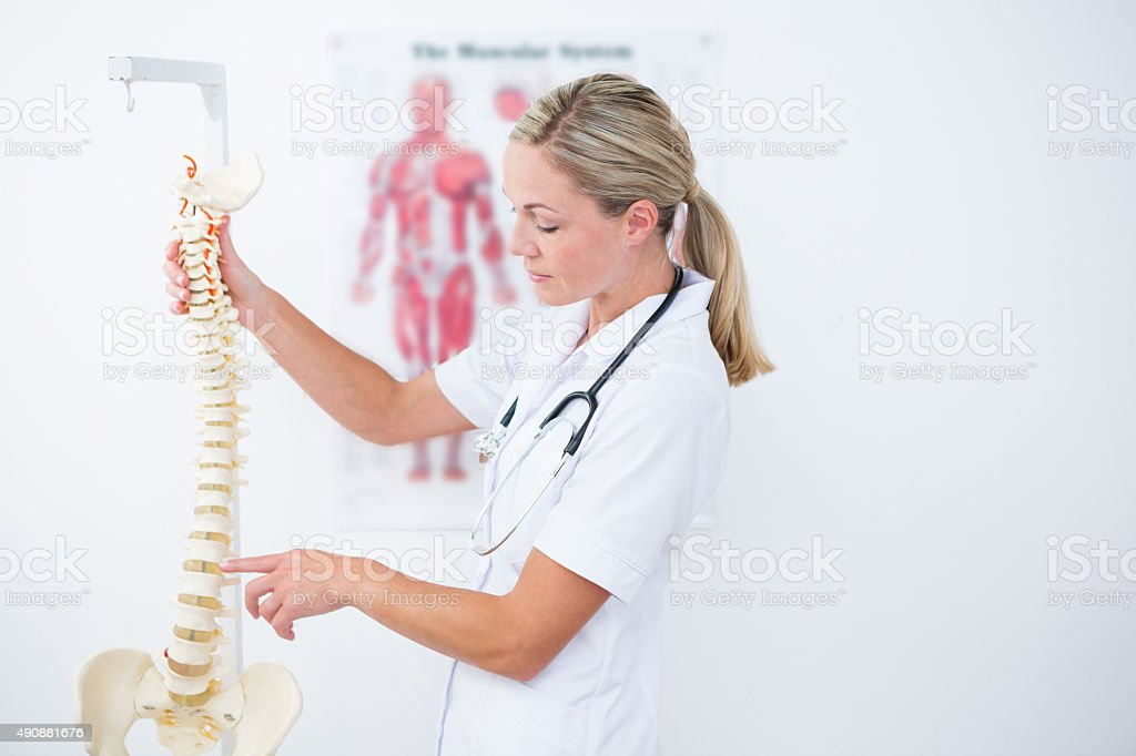Doctor showing anatomical spine stock photo