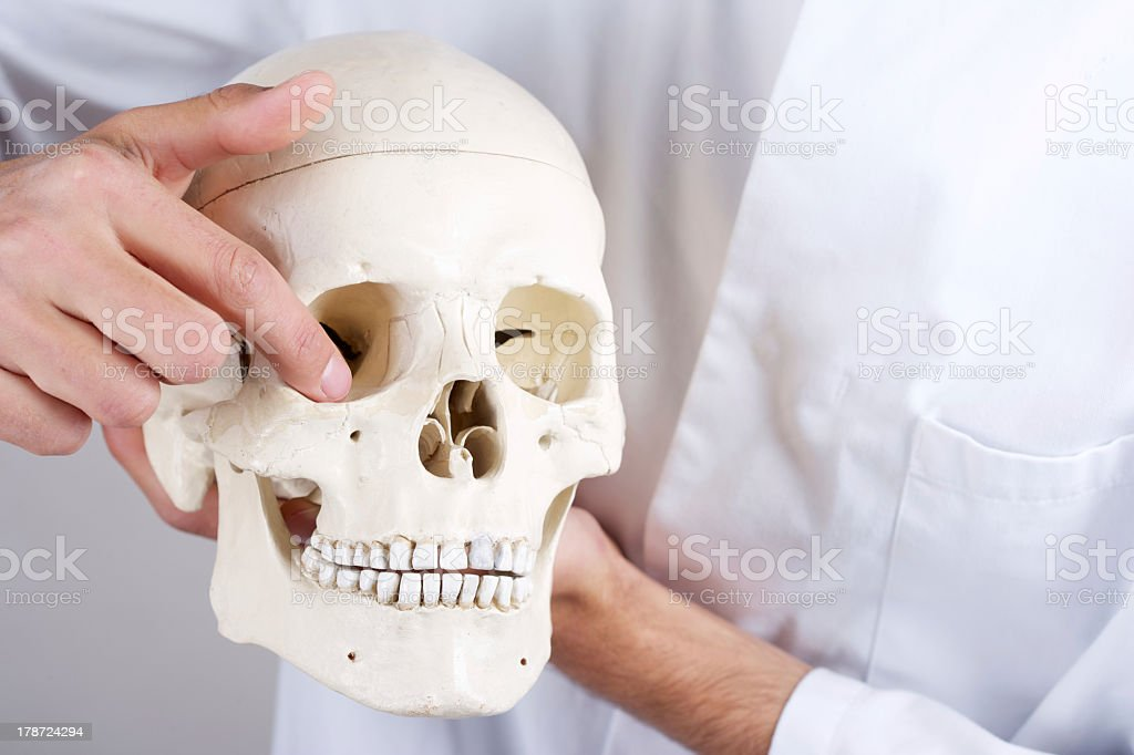 doctor showing orbital floor stock photo
