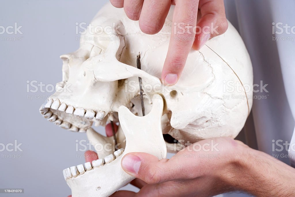 doctor showing temporomandibular joint stock photo