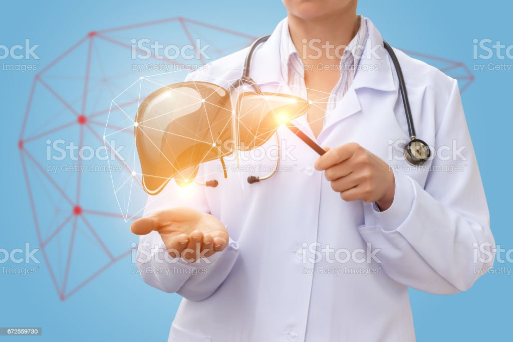 Doctor shows liver. stock photo