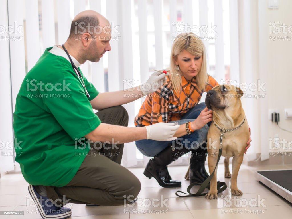 Doctor Testing Biological Specimen stock photo
