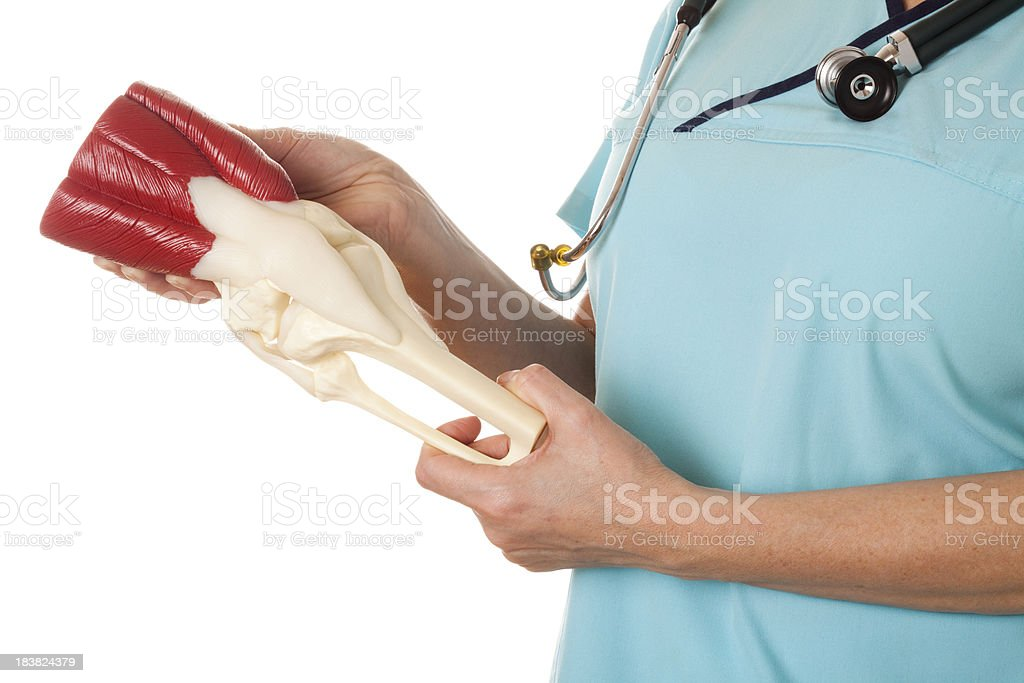 Doctor with knee model stock photo