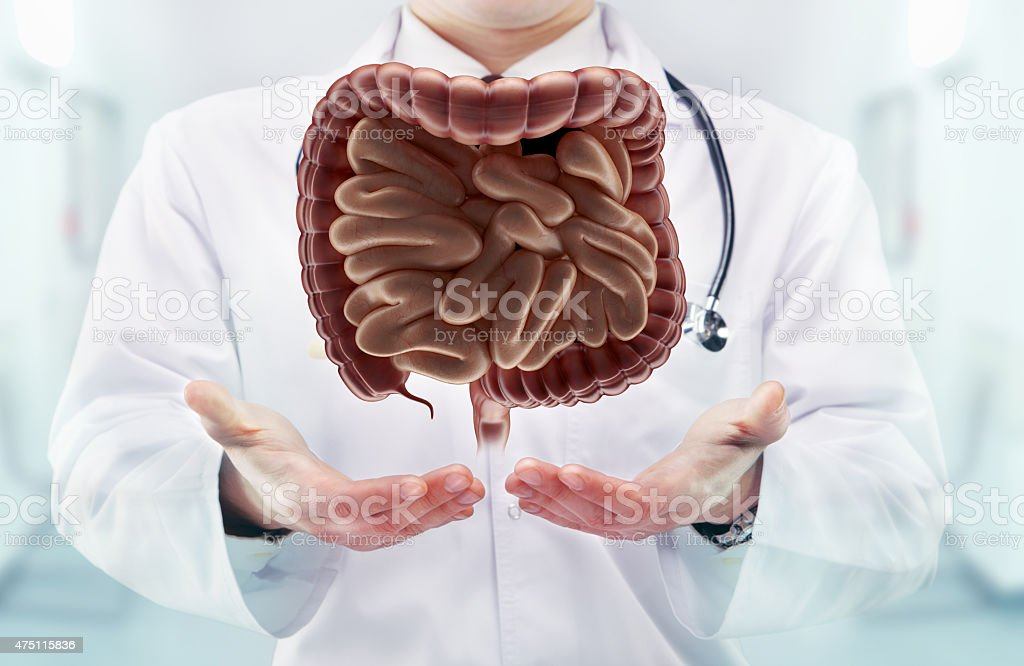 Doctor with stethoscope and digestive system on the  hands stock photo