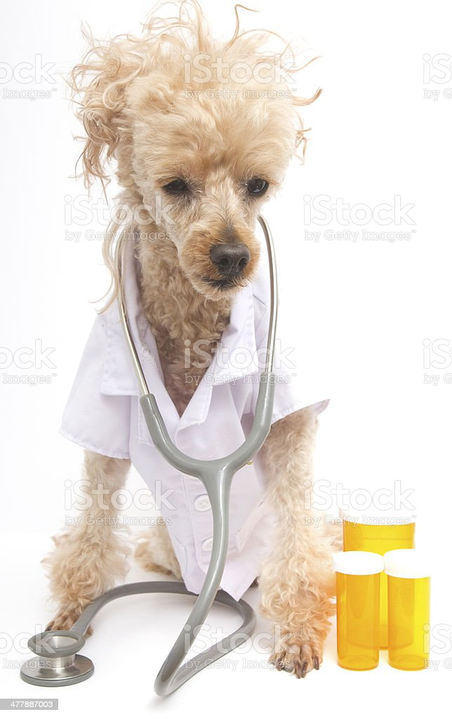 Doctor with Stethoscope and Pill Bottles royalty-free stock photo
