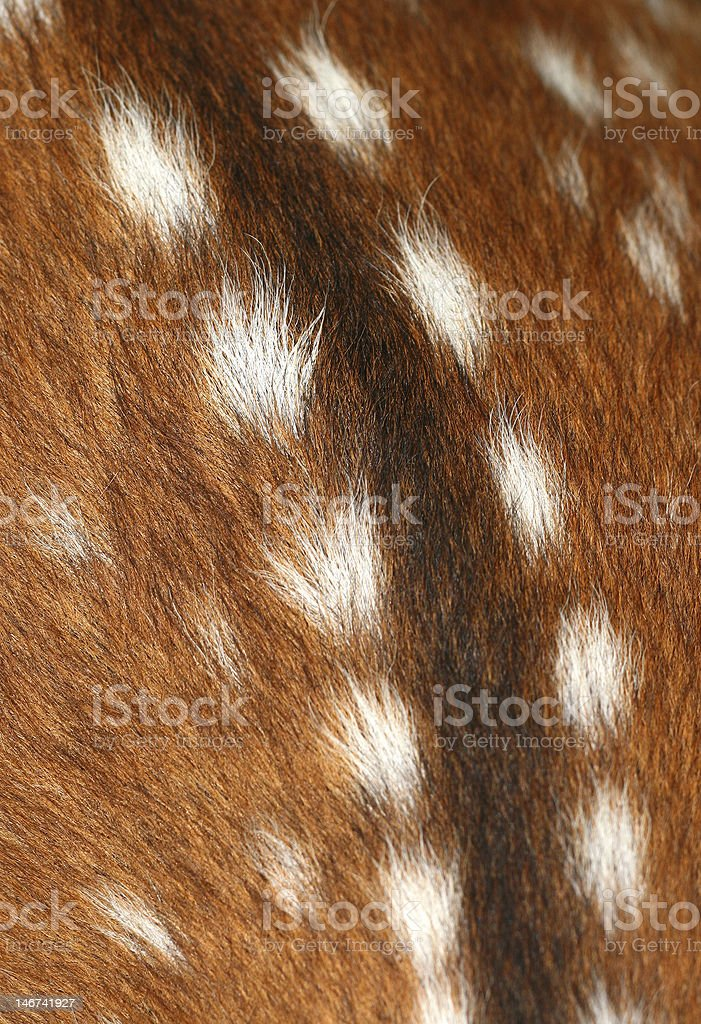 Doe skin structure royalty-free stock photo