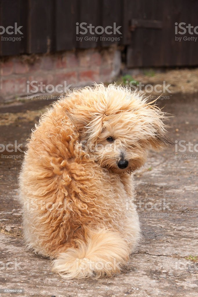 Does my bum look big in this? stock photo