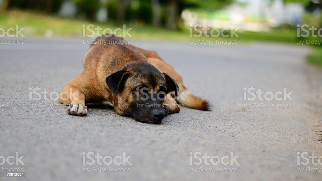 Perro un nativo foto de stock libre de derechos