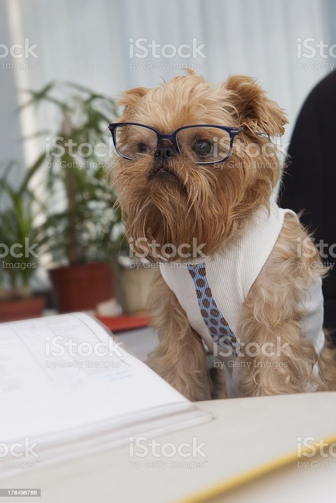 Dog accountant royalty-free stock photo