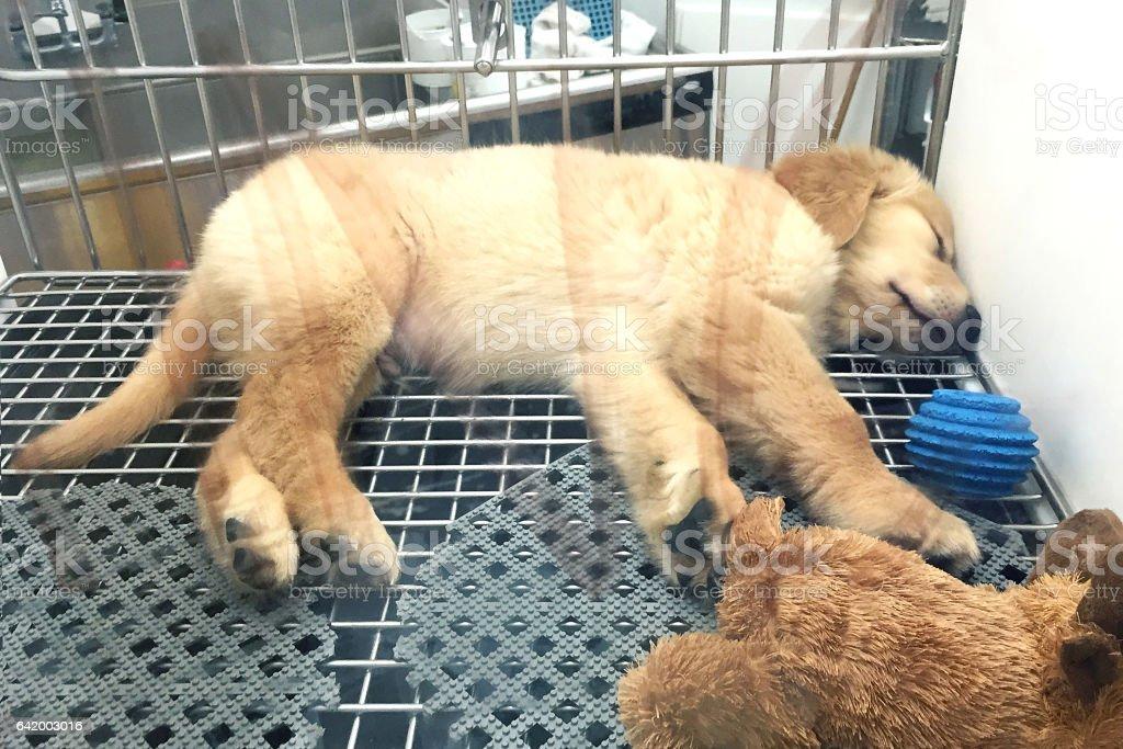 Dog Adoption stock photo