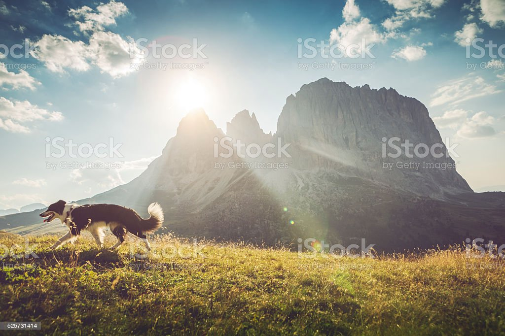 Dog adventures on the Dolomites stock photo