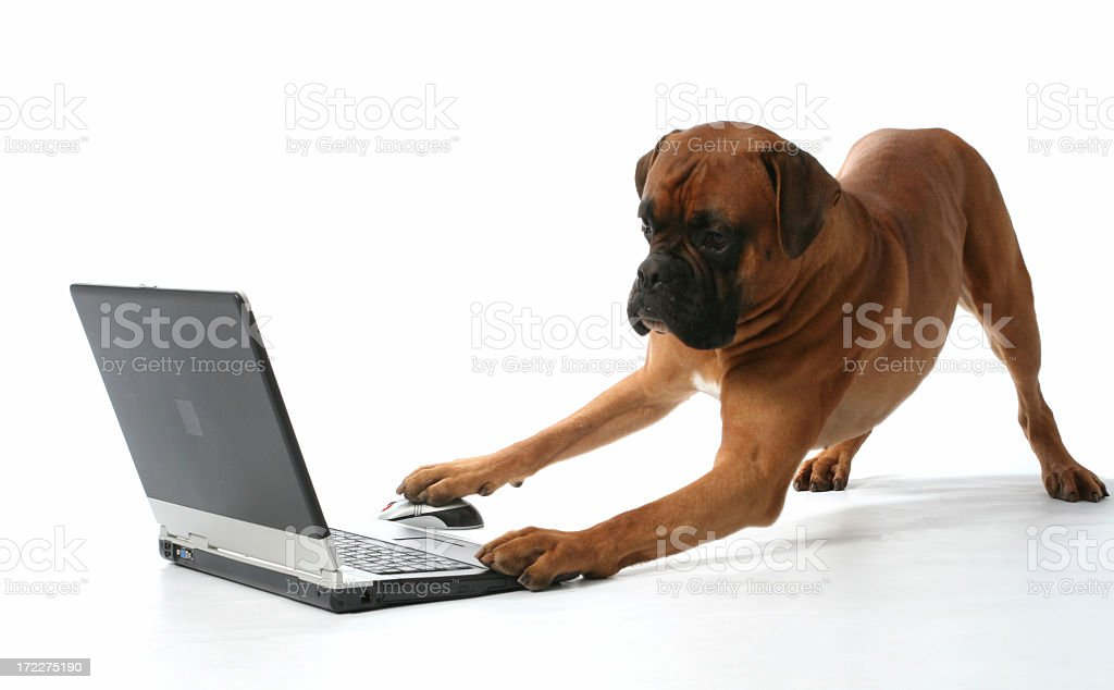 Dog almost finished doing something on the laptop royalty-free stock photo