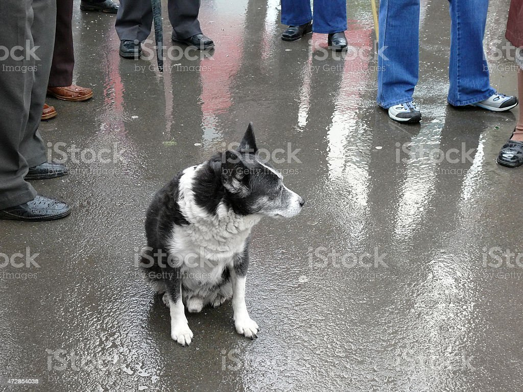 dog among the crowd stock photo