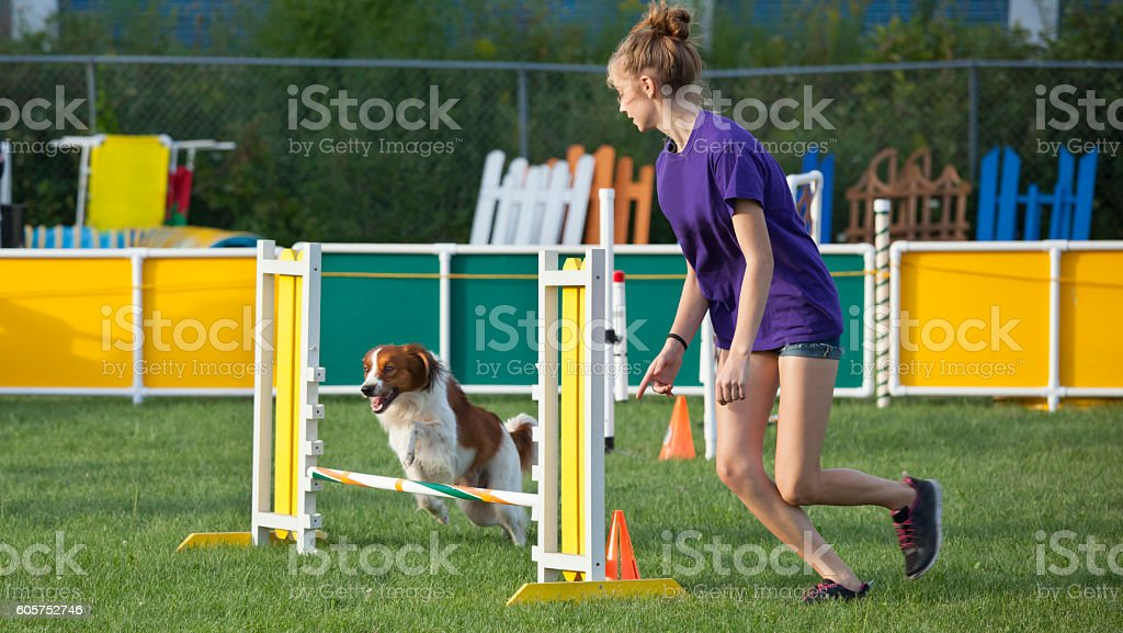 Dog and attentive handler running together in agility competition stock photo