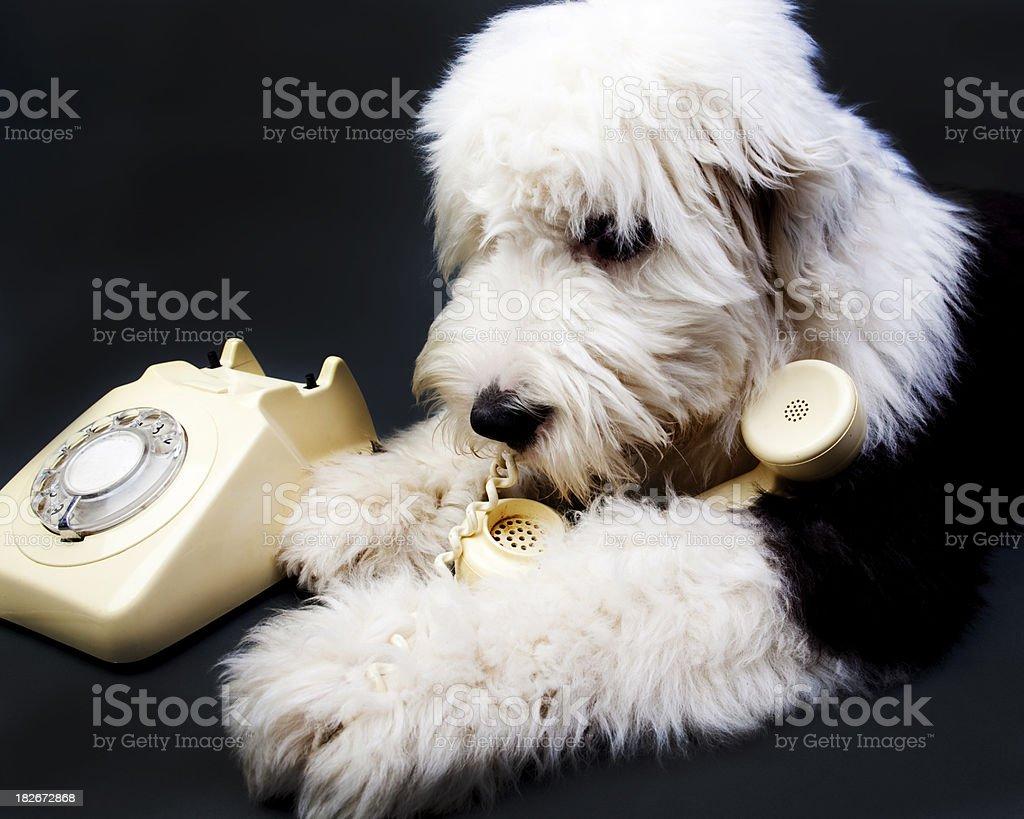Dog and bone royalty-free stock photo
