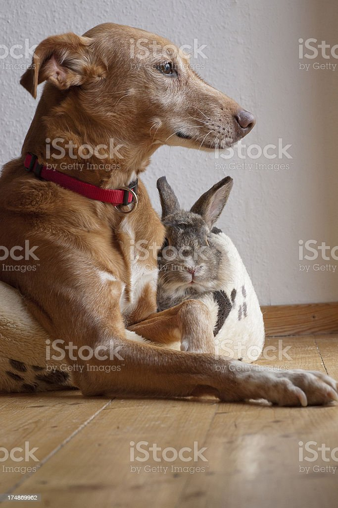 Dog and bunny sitting together royalty-free stock photo