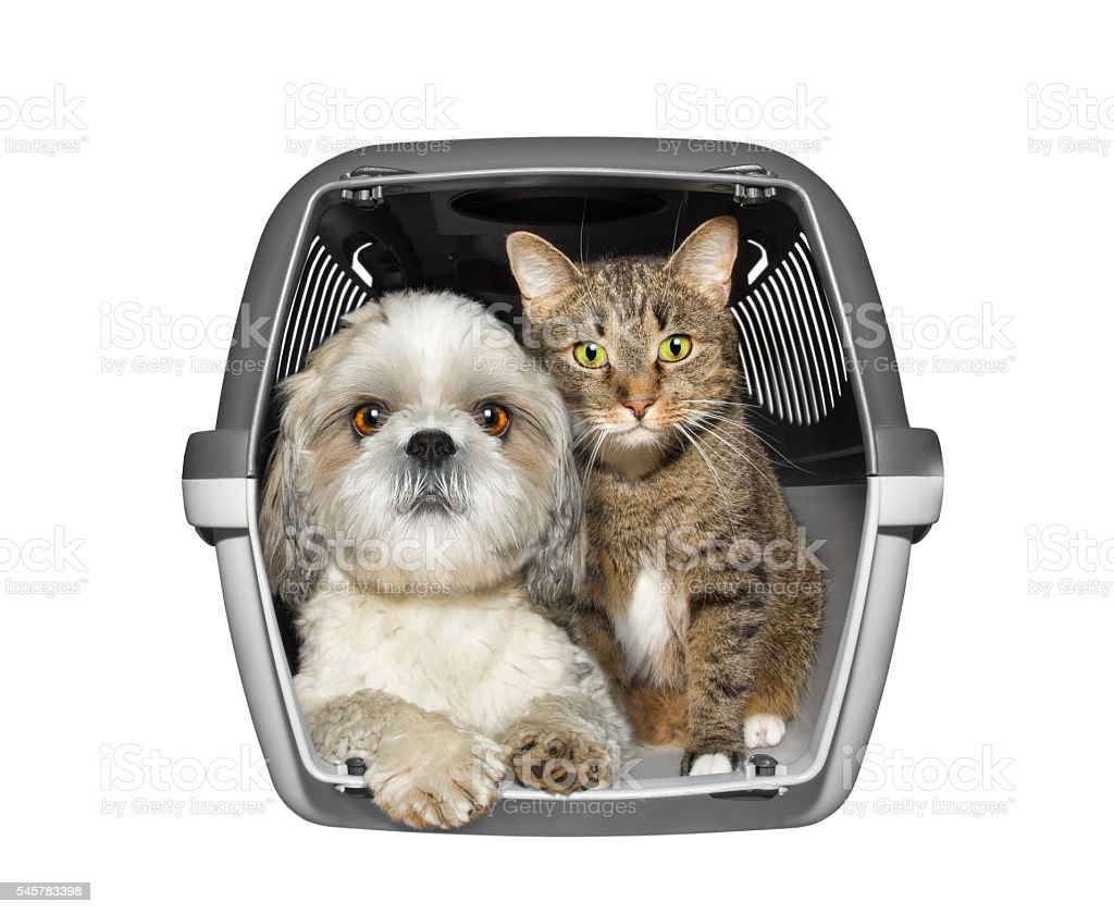 Dog and cat are sitting in the container box stock photo