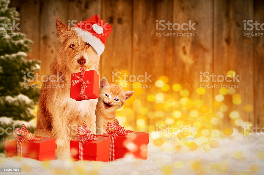 Dog and cat at Christmas with gifts stock photo