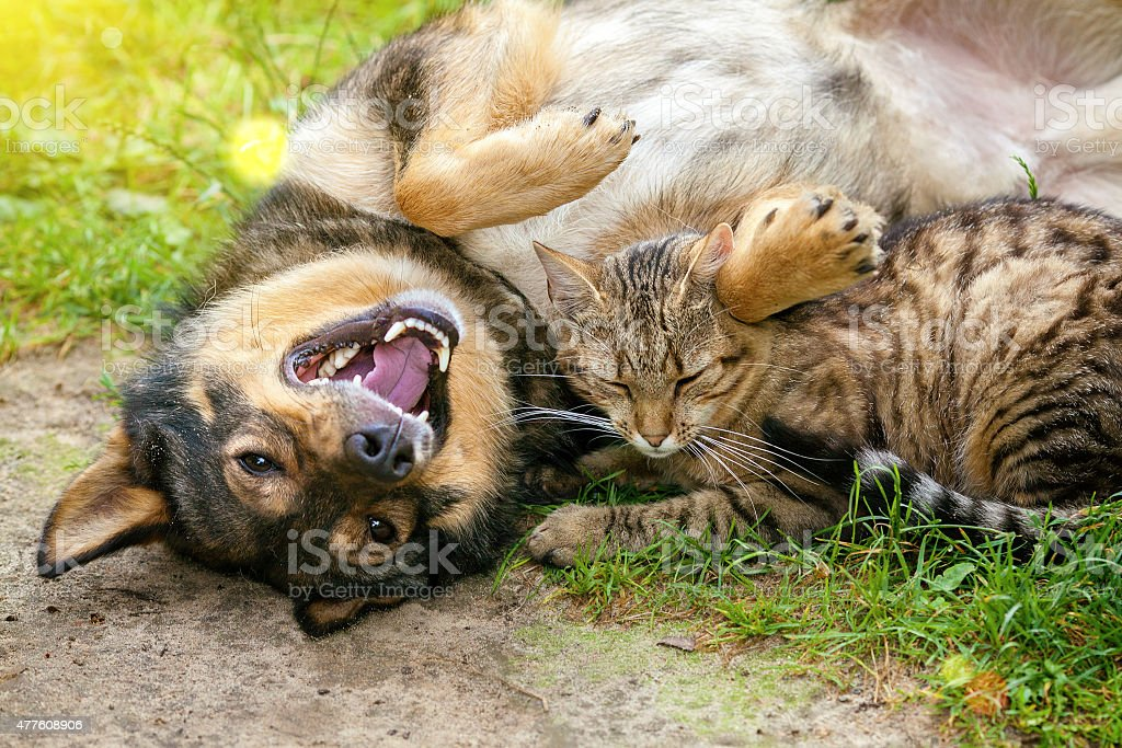 Dog and cat best friends playing together outdoor stock photo