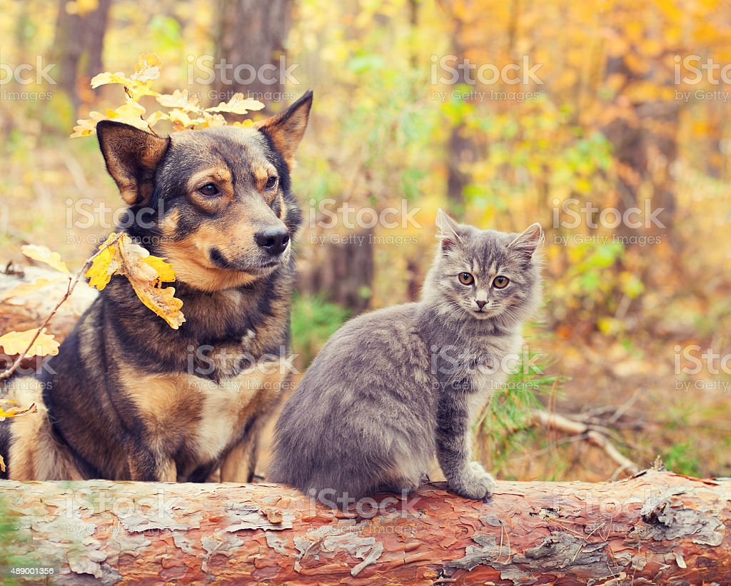 Dog and cat best friends sitting together in autumn forest stock photo