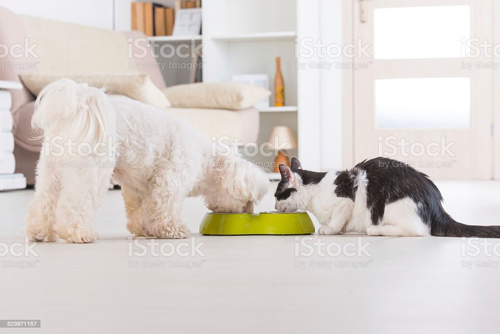 Dog and cat eating food from a bowl stock photo