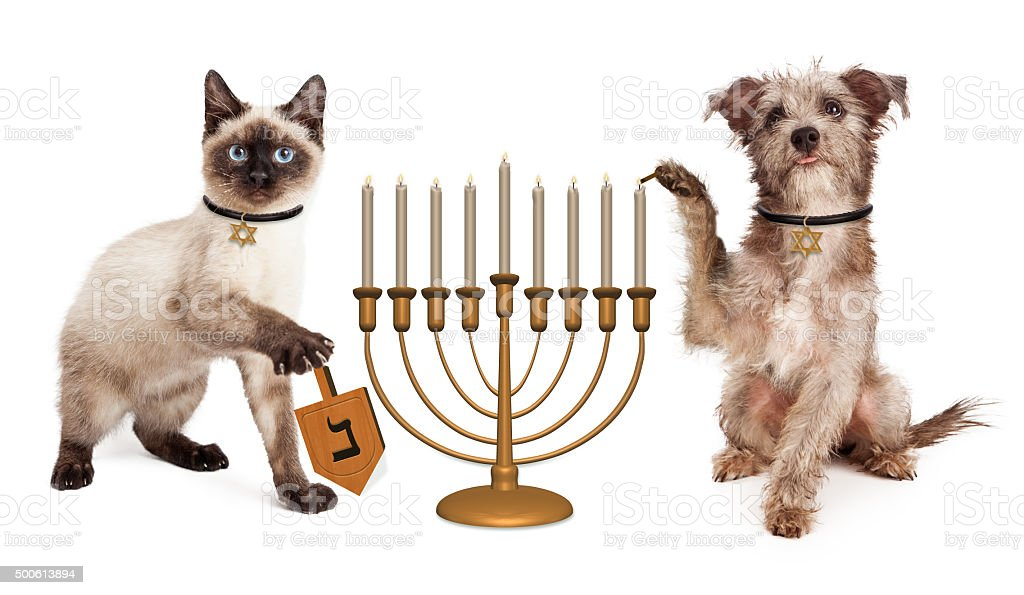 Dog and Cat Hanukkah Celebration stock photo